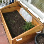 The whole enchilada in the cold frame.